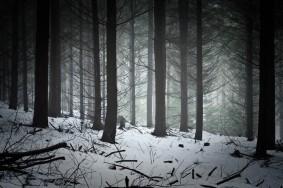 paysage photo foret