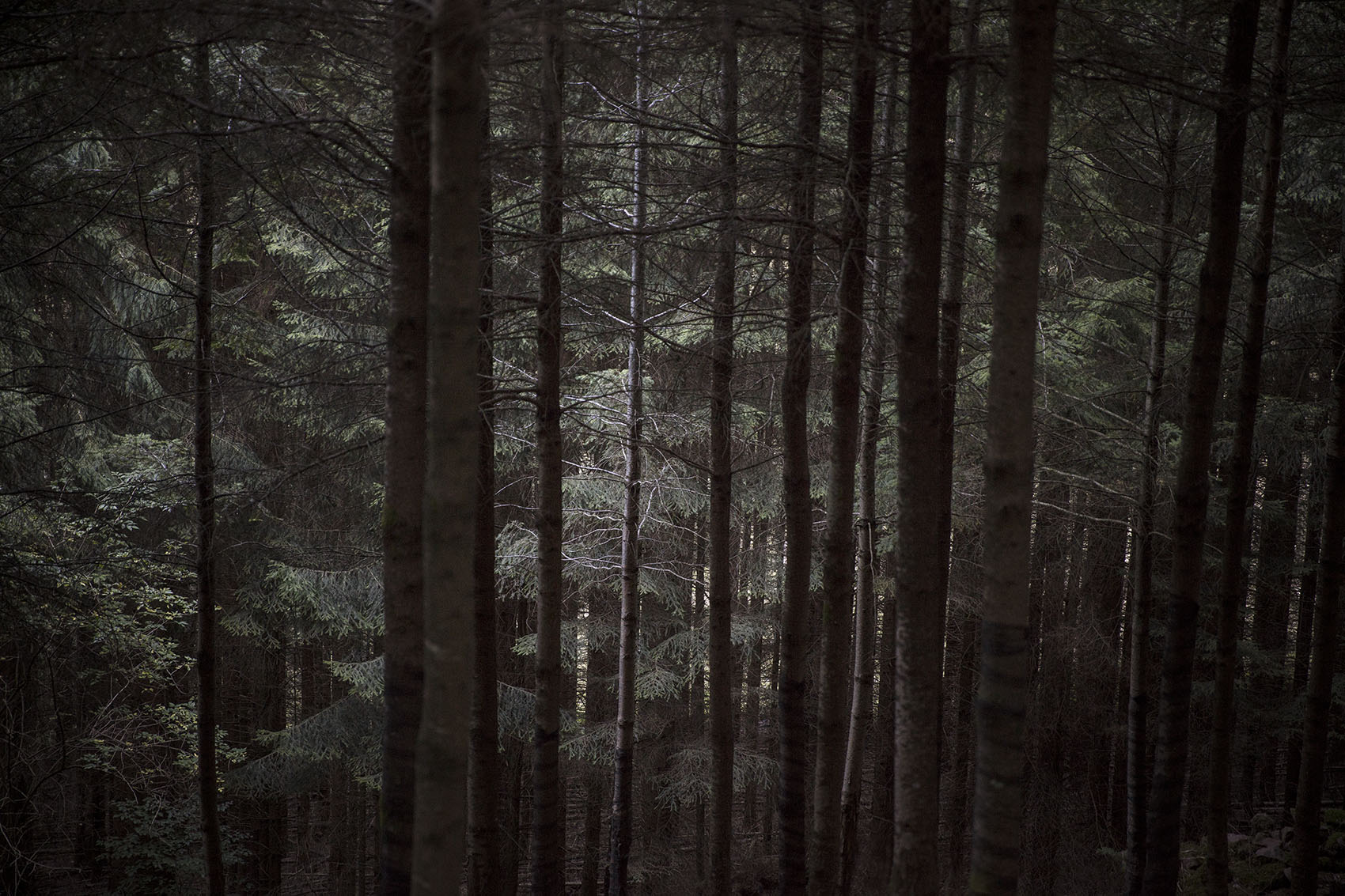 forest-00